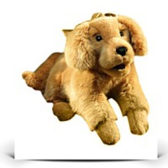 On SaleGolden Retriever Puppy